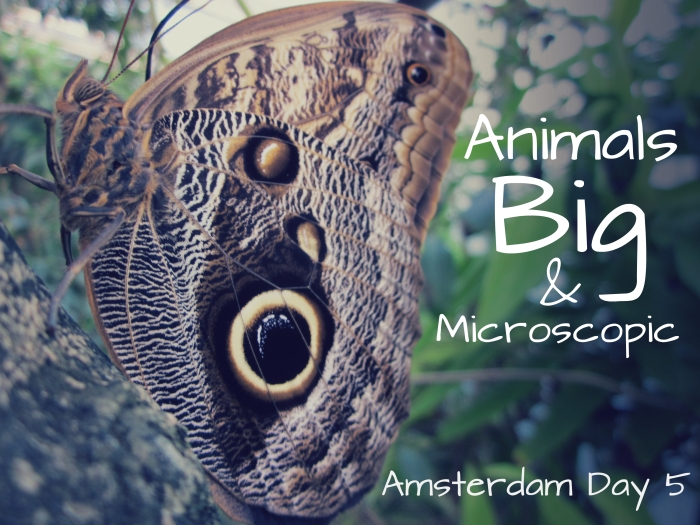 Amsterdam Day 5: Animals Big and Microscopic